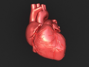 http://www.fallingpixel.com/products/11334/mains/000-3d-model-Human%20Heart%2001.jpg
